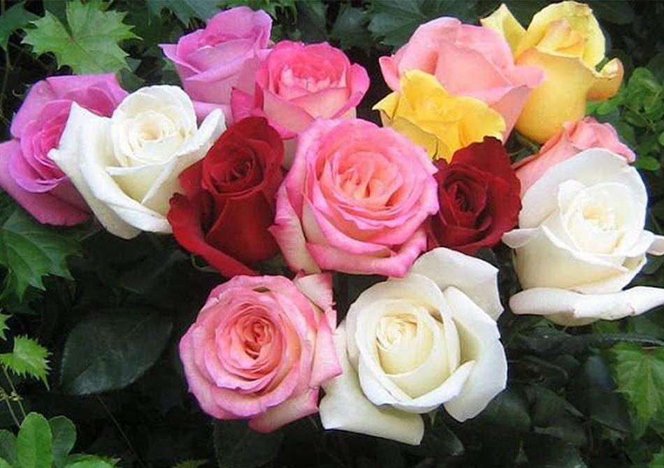 Artikel 1 Parcel Bunga - Jenis Parcel Bunga yang Cocok untuk Pacar (7)